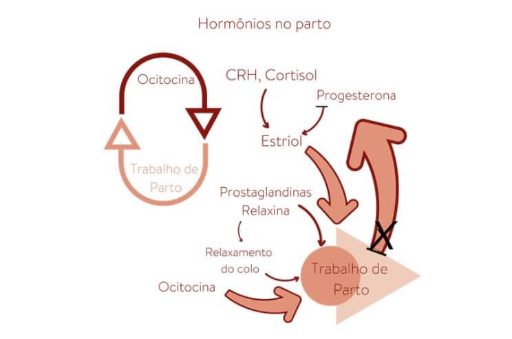 Produzida pela placenta e pelo corpo lúteo dos ovários, ajuda a amolecer as articulações e ligamentos pélvicos para ajudar na passagem do bebê. Ela também permite a distensão do útero conforme o bebê cresce.